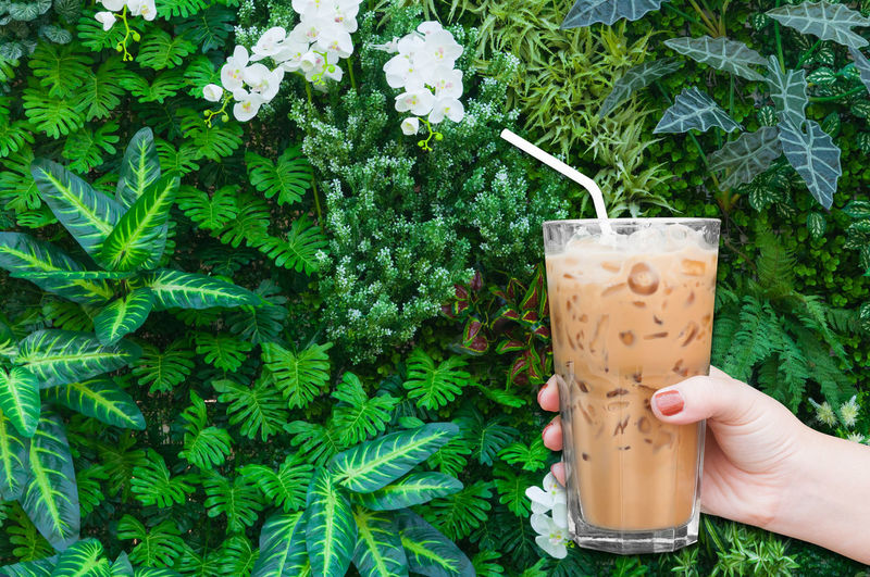 woman hand holding the glass iced coffee on green nature background,Iced latte coffee Coffee Body Part Day Drink Drinking Drinking Glass Drinking Straw Finger Food Food And Drink Freshness Glass Green Color Hand Herb Holding Human Body Part Human Hand Mint Leaf - Culinary One Person Plant Real People Refreshment Straw Unrecognizable Person