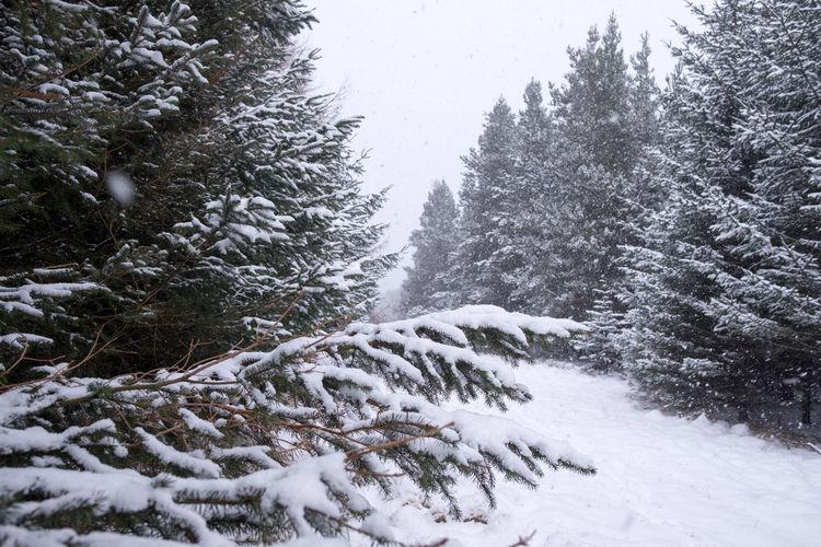Stoodley Pike Trees Walks Forrest Snowy Day Todmorden Winter Wonderland