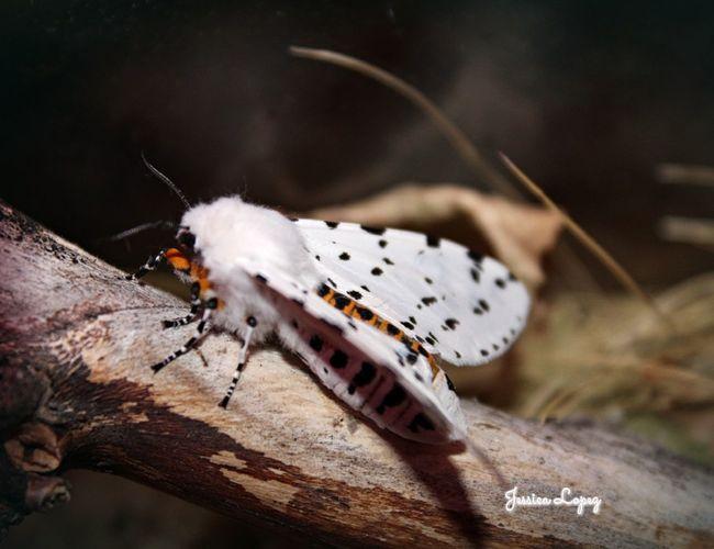 Relaxing Trendstagram Hello World Beautiful EyeEm Best Shots - Nature Love To Take Photos ❤ Summer Summertime Summer2016