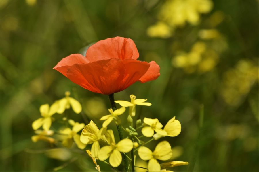 Beauty In Nature Day Flower Flower Head Flowering Plant Fragility Land Nature Outdoors Plant Red