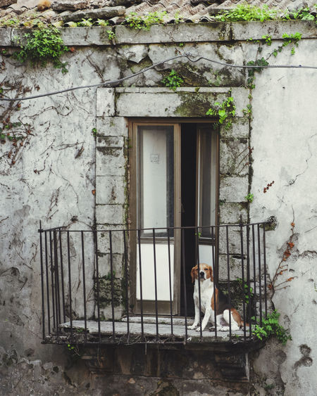 View of a dog sitting on building