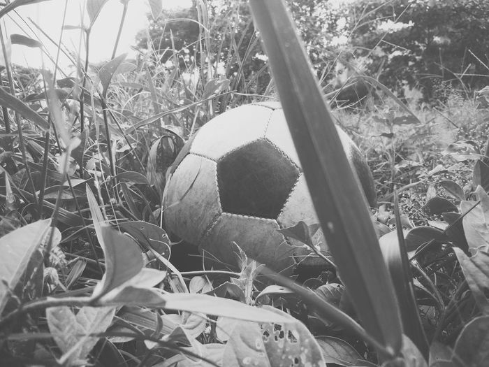 Monochrome Photography Plant Close-up Nature Tranquility Green Color Growth Remote Plant Life Non-urban Scene Field Day Game Day! Footballfan