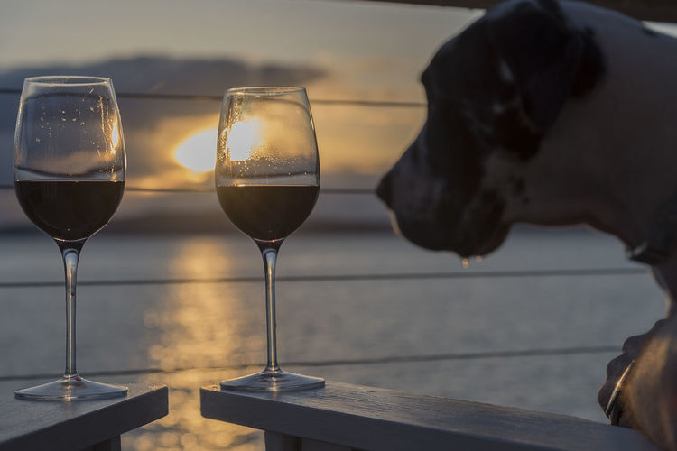 Close-up of red wineglasses on wooden handles by dog during sunset