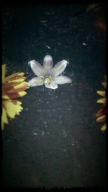 Adrift Bouquet In A Bottle White Flower Flower Flowerporn EyeEm Gallery EyeEm Nature Lover