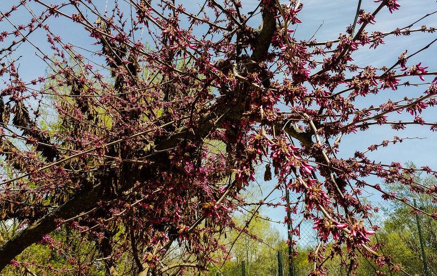 Nature Tree Flower Morroco Ifrane Maroc Snapchat : Akouaouchissam1