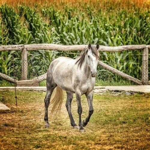 Horse Asturias Taking Photos EyeEmBestEdits