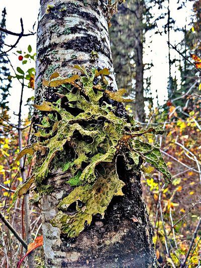 lichen on a