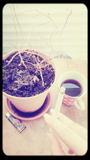Smoking Tea Flowers