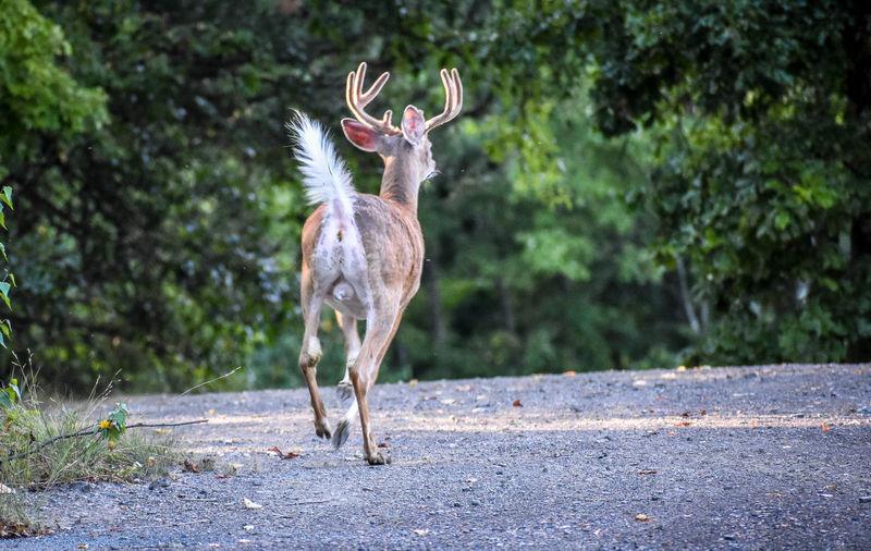 Deer standing on road amidst trees
