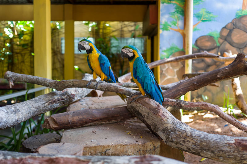 Langkawi Animal Vertebrate Animal Wildlife Animal Themes Animals In The Wild Bird Group Of Animals Perching Tree Branch Focus On Foreground Two Animals Parrot No People Day Plant Nature Outdoors Wood - Material Beauty In Nature