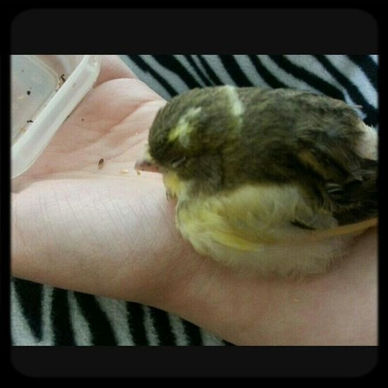My beautiful jackie passed away last month. Im pretty sad that i lost her but shes in Birdie Heaven Ilovemybird Rip