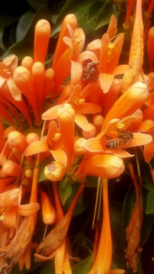 Orange Color Nature Beauty In Nature Flower Freshness Growth Close-up No People Plant Day Outdoors Growth Suny Day ☀️ Nice Day Bee 🐝