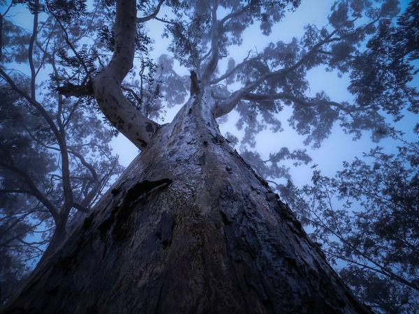 Tree, Nature, Rain, Hunting, Sunrise