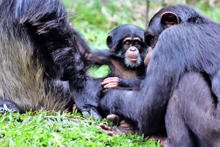 Wildlife and forestry EyeEm Nature Lover EyeEm Gallery Animal Animal Family Animal Themes Animal Wildlife Animals In The Wild Ape Bestoftheday Black Color Care Day Group Of Animals Mammal Monkey Nature No People Outdoors Plant Primate Sitting Togetherness Two Animals Vertebrate Young Animal