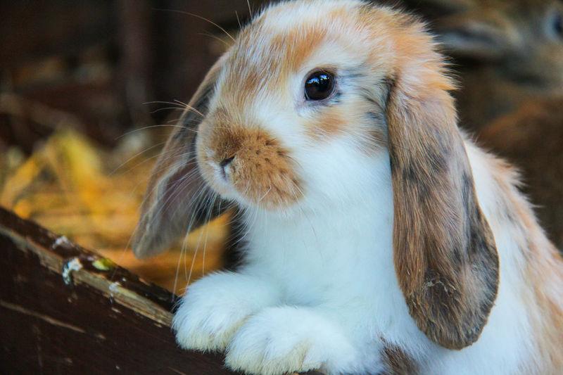 EyeEm Bestsellers Ram Rabbit Portrait
