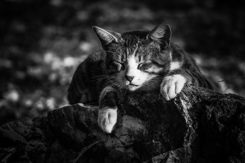 Cat sleeping on rock