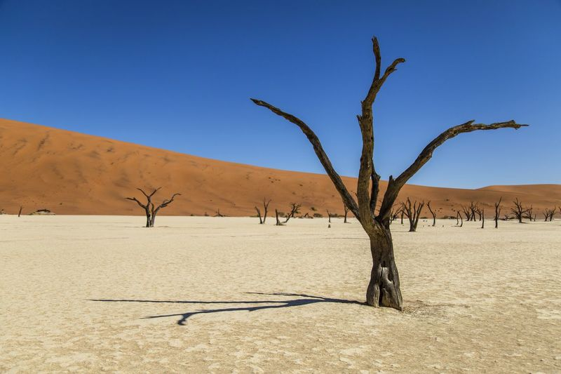 Deadvlei • Namibia Desert Sand Dune Landscape Phototraveller Liveforadventure Canon 6D Eyemphotography Follow Me On Instagram ♥ Livefortravel Viaggiare EyeEmNewHere Photograph Globetrotter Travel Photography Travel Destinations Lonelyplanet Wanderlust Namibia Africa Deadvlei Tree Colors