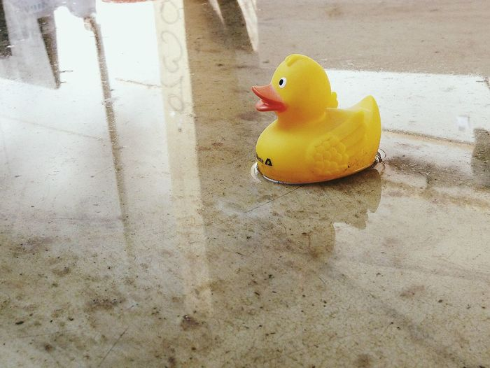 High angle view of rubber duck on wet floor