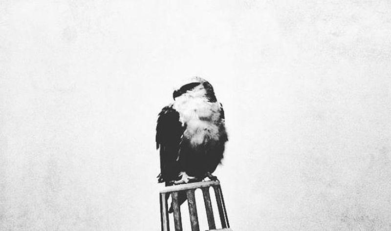 LIKE A BOSS! 😎 Birdporn Birds LikeABOSS Sonyphotography 2014 Throwback Bnw Monochrome Grayscale Bnwlovers Bnw_society Bnw_captures Bnw_life Bnw_demand Bnw_world Photographyislife Instadaily Photographybros