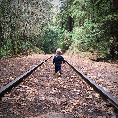 California Landscape EyeEm Nature Lover Nature Red Woods Forest Trees Boy Vanishing Point Train Tracks