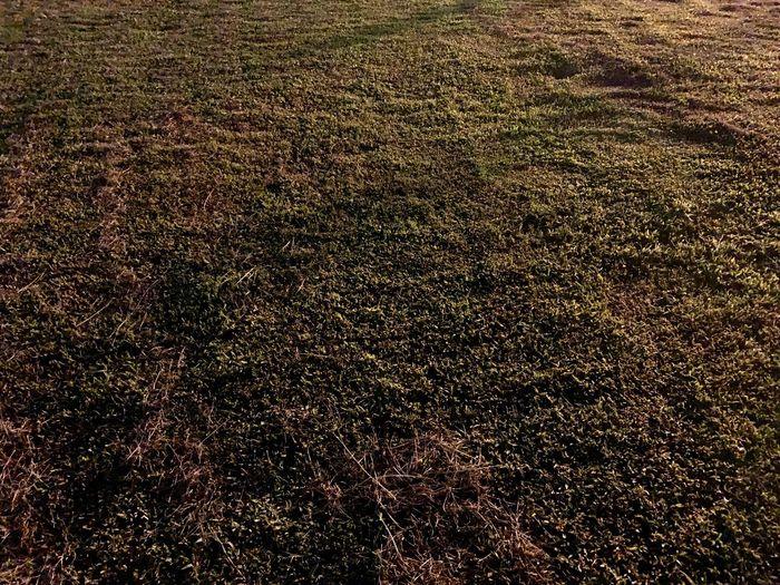 Field Full