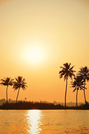 sun goes down EyeEm Selects Water Tree Palm Tree Tropical Climate Plant Tranquility Nature Sun Sky Beauty In Nature Scenics - Nature Reflection Sunset Tranquil Scene Sunlight Coconut Palm Tree Tropical Tree The Great Outdoors - 2018 EyeEm Awards The Traveler - 2018 EyeEm Awards