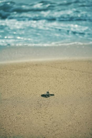 Beach Going Home Home Turtle Seaside One Alone Happy