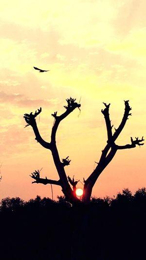 Sunset Orange Color Sky Nature Tree Beauty In Nature Sun Outdoors