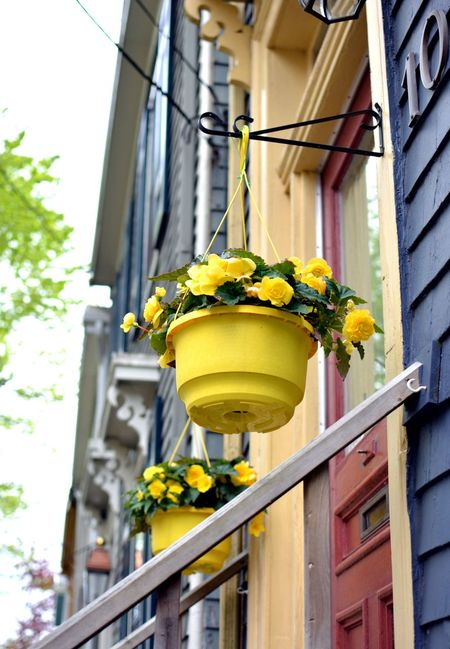 The coming of Spring Yellow Flower Architecture Building Building Exterior Built Structure City Day Electric Lamp Flower Flower Pot Flowering Plant Focus On Foreground Freshness Glass - Material Growth Lighting Equipment Low Angle View Nature No People Outdoors Plant Window Yellow Yellow Poppy
