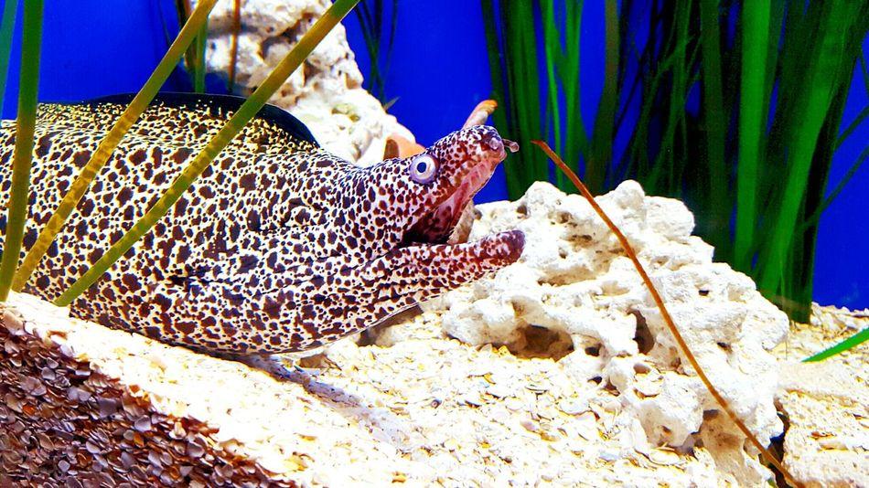 Animals Eel Spotted Eel Aquarium Aquarium Life Wildlife Wildlife & Nature Sea Creatures Aquatic Life Highsaturation Beautiful Beauty In Nature Animals In Captivity