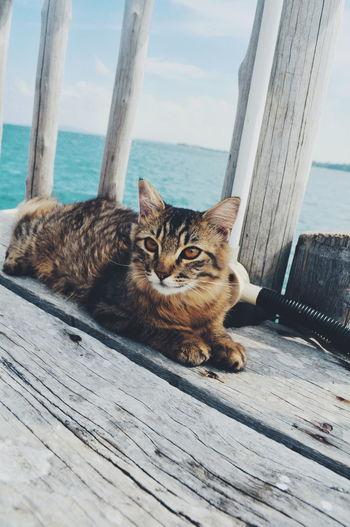 Portrait of cat relaxing on wooden floor