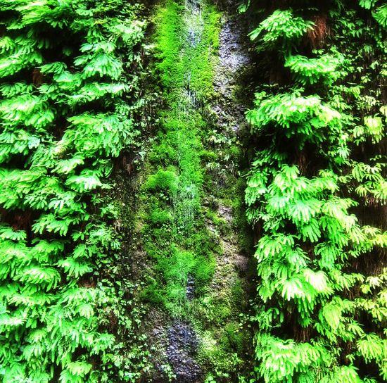 Waterfall Ferns Green Plant Wall Fern Canyon Humboldt