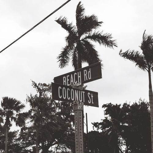 Signs Signboard Saipan Blackandwhite Coconut