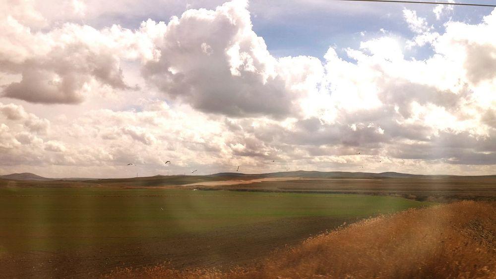 Leylek Eskişehir Stork Storks Trein World Nopeople