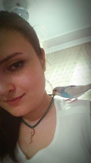 EyeEm Animal Lover Animals Bird Muhabbetkusu Budgie Budgielove Mavişim