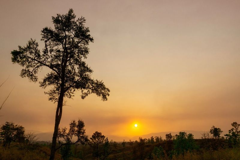 Tree Plant Sky Sunset Beauty In Nature Tranquility Scenics - Nature Orange Color Nature Tranquil Scene Copy Space Environment Landscape Outdoors Silhouette Sun