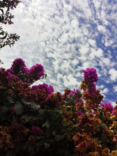 Close-up of flowers on tree against sky