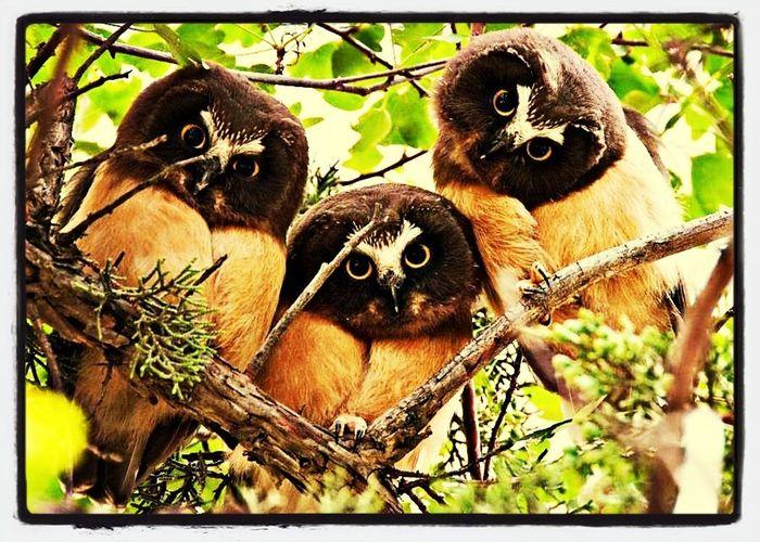I heart u guys big time..;) Eye Em Nature Lover Eye Em Best Shots Owl HDR Collection