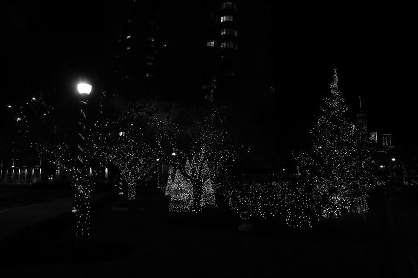Black and White Newport Christmas Newport Jersey City Night Photography Architecture Building Exterior Building Photography Canon 70d Celebration Christmas Christmas Decoration Christmas Lights Christmas Tree Illuminated Night No People Outdoors Tree Under Exposure
