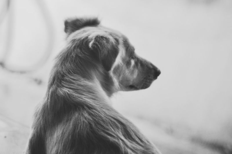 Day Dog Domestic Animals Mammal No People One Animal Outdoors Pets Black And White Friday Fresh On Market 2017
