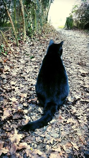 Meeting with this black cat for the first running of the year 😻💪 Running Time BLackCat Firstdayoftheyear Training Enjoying Life Animal Photography Animallovers Naturelovers Workoutgirl Wintertime Nature Photography Blackcatlove