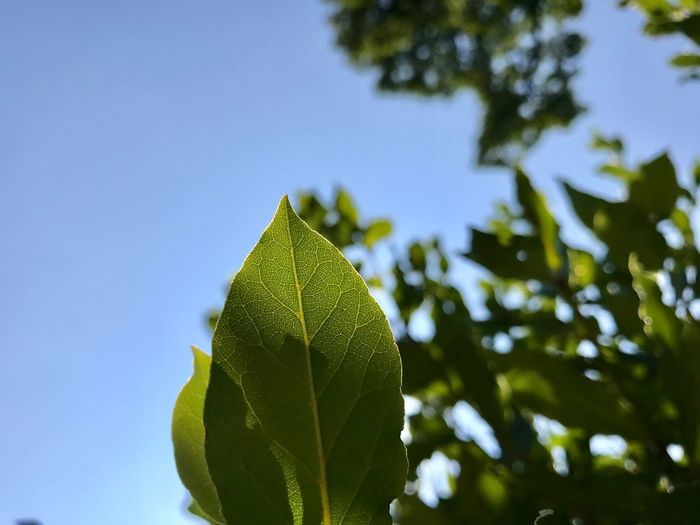 Close-up of leaves against sky