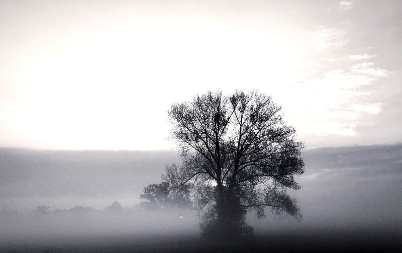 Tree Lone Bare