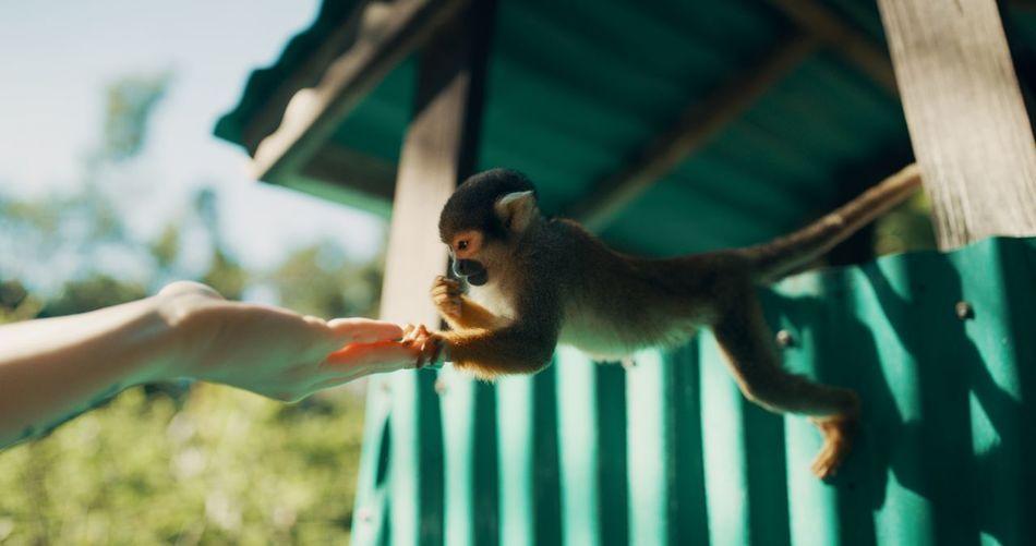 Squirrel eating food in zoo