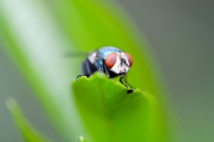 Macro Shot Of Housefly On Leaf