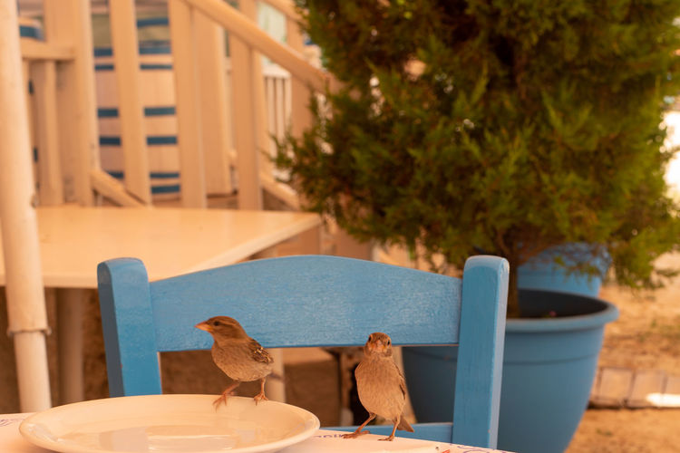 View of bird perching on chair