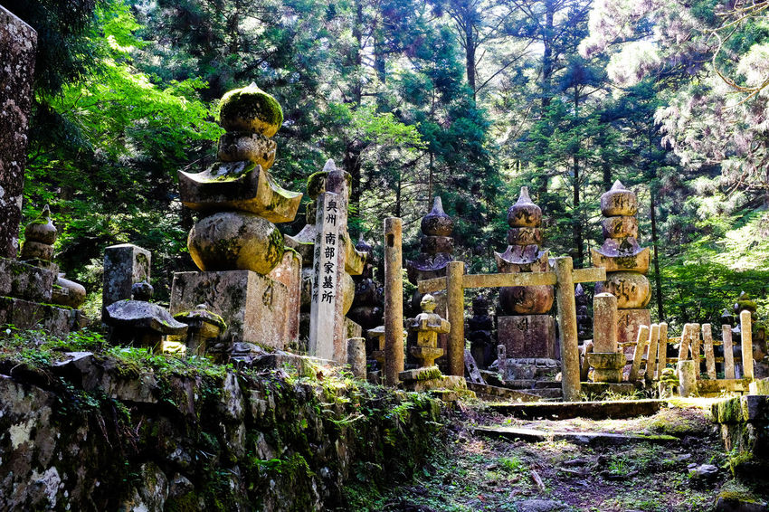 Stone plinths and columns mark burial sites in this ancient Buddhist cemetery, going back 1,200 years, hidden deep in the forested mountains of rural Japan. ASIA Atmosphere Buddhist Cemetery Culture Of Japan Hidden Gems Japan Japanese  Japanese Culture Shrine Shrines & Temples Tradition Ancient Civilization Buddhism Culture Culture And Tradition Forest Hidden Jungle Religion Religious  Secret secret garden Spirituality Stone