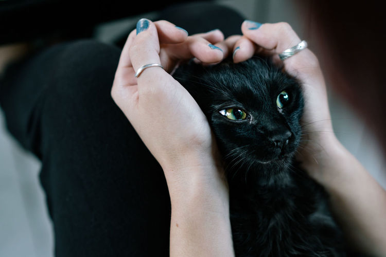 Pet Portraits Pets Human Body Part Animal Domestic Cat Black Color Adult People Portrait Domestic Animals Human Hand One Animal Only Women One Person Beauty Indoors  Combing Close-up Black Background Cat Cats Cat♡ Collar One Woman Only Adults Only