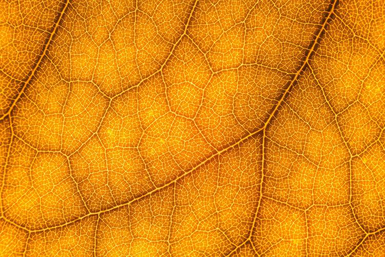 Full Frame Shot Of Orange Leaf During Autumn