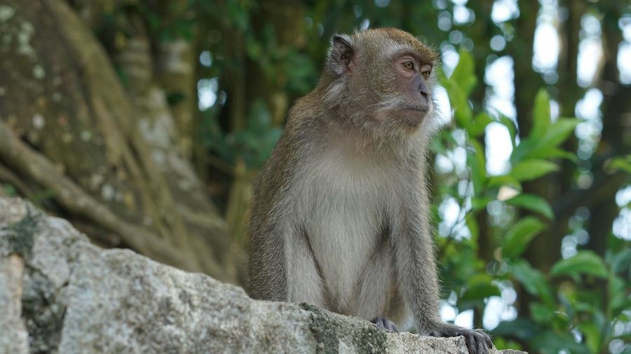 Low angle view of monkey looking away